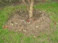 Plantation_trou_arrosage_1